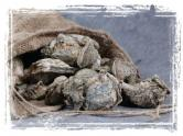 Sack Oysters